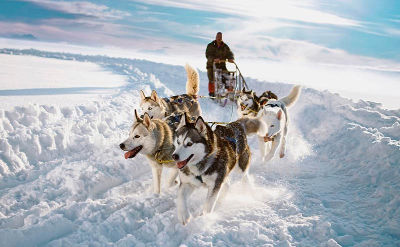 Travel around Lapland.